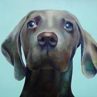 Little Weimaraner Looking Up