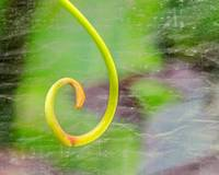 Rhythm of Spring - Minimalistic Fine Art Photgraph