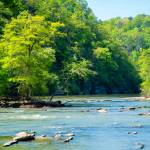 """A Spring Morning on the Chattahoochee River"" by Littlepig"