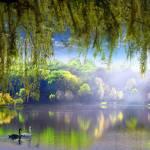 """""""Spring Waters"""" by zenin"""