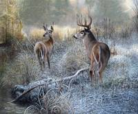 Morning Frost- Whitetail