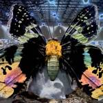"""""""psychedelic butterfly"""" by ideaproductions"""
