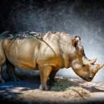 """Rhinoplasty"" by tomgehrke"