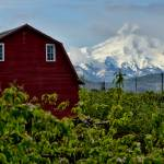 """The Red Barn and Mt. Hood"" by boppintheblues"