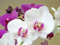 Orchids Flowers art prints Orchid Floral
