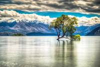 Lake Wanaka Willow Tree