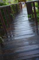 Tropical Bridge 2