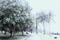 Digital Infra-red - Singapore town