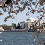 """Jefferson Memorial framed by Cherry Blossoms"" by FlattenPhotography"