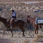 """""""100 Mules to Los Angeles"""" by manusferrea"""