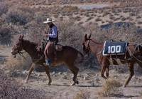 100 Mules to Los Angeles