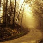 """""""Jefferson Landing Road"""" by LauraD"""