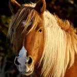 """Horse from Assateague Island"" by FlattenPhotography"