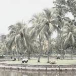 """Digital Infra-Red - Coconut Tree"" by sghomedeco"