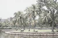 Digital Infra-Red - Coconut Tree