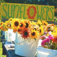 Sunflowers For Sale on a Wagon