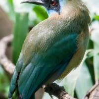 exotic blue cyan bird by Alexandr Grichenko