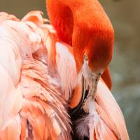 pink flamingo at a zoo in spring by Alexandr Grichenko