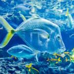 """salt water fish in the ocean or aquarium"" by digidreamgrafix"