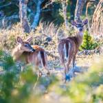 """""""white tail deer bambi in the wild"""" by digidreamgrafix"""