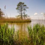 """nature around mattamuskeet lake north carolina"" by digidreamgrafix"