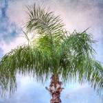 """Palm Tree (3672)"" by Fotofrieze"