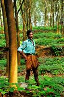 Proud Rubber Plantation Caretaker