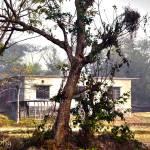 """""""A House in Bangladesh"""" by AlamgirKhan"""