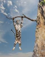 Funny-Tiger-Hanging-In-There