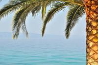 Palm tree with sea in background