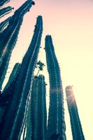 Cactus Towers