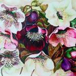 """MIXED HELEBORES"" by cassiakdkb"