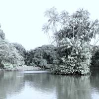 Infra-red digital, botanic garden Singapore Art Prints & Posters by Blue Sentral Photography