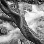 """Tree"" by marcutti"