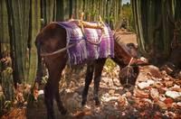 Donkeys gallery