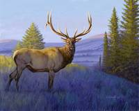 Elk in Morning Light