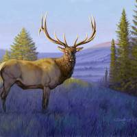 Elk in Morning Light Art Prints & Posters by Tim Beasley