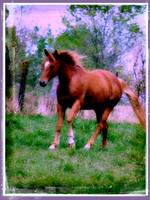spring_dreams__sorrel_trotting_by_angelandspot-d5i