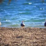 """Seagulls"" by marcutti"