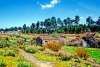 Canas River, Another Century 75011Ek