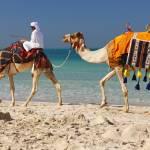 """""""Camel"""" by marcutti"""