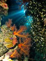 Cave of Soft Corals and Silvergrass Fish