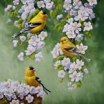 """Goldfinch Blossoms"" by csforest"