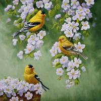 Goldfinch Blossoms Art Prints & Posters by Crista Forest