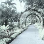 """Digital Infra-Red , Botanic garden Singapore"" by sghomedeco"