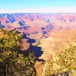 """""""Grand Canyon Framed Through the Trees"""" by FingerLakesPhotos"""