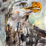 """Bald Eagle Wildlife Watercolor"" by GinetteCallaway"