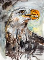Bald Eagle Wildlife Watercolor
