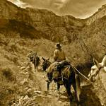 """""Mule Train"" Grand Canyon"" by AlexandraZloto"