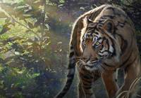 edge of light-- bengal tiger